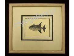 GRAVURES FISHES 30X35